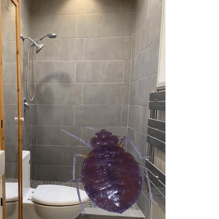 A bed bug in a bathroom with grey tiles.