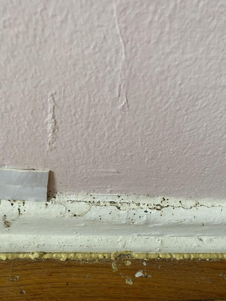 Bed bug fecal matter on a wall and molding behind a bed.