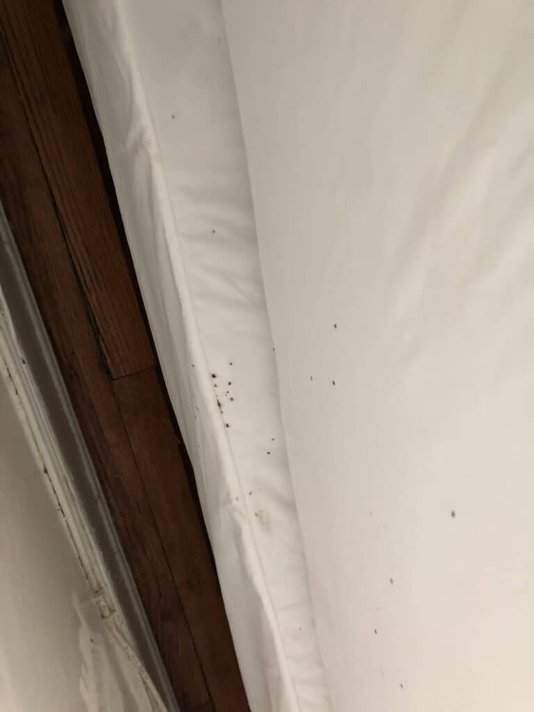 Bed bug droppings on a white sheet